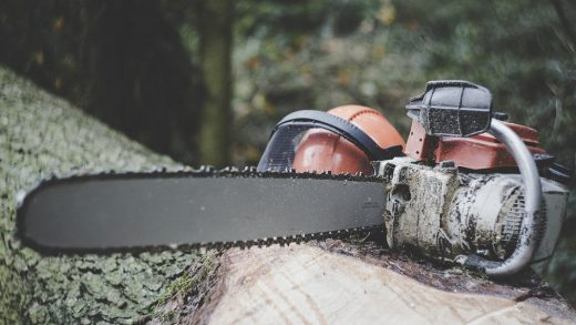 Tree Felling, Tree Felling Cape Town, arborist, tree removal cape town, tree cutting